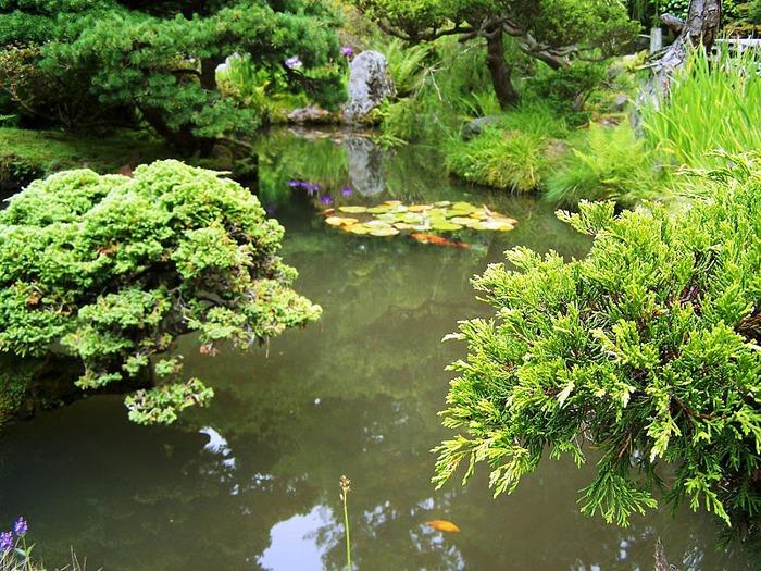 Японский чайный сад -(Hakone Japanese Tea Garden) 52338