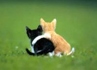 Друзья. Котенок обнимает другого котенка