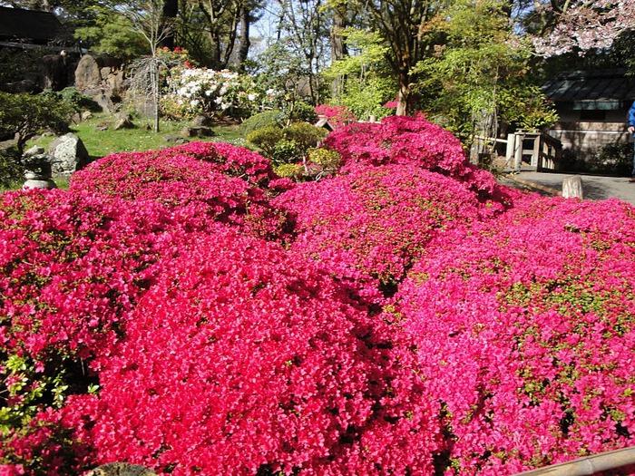 Японский чайный сад -(Hakone Japanese Tea Garden) 93922