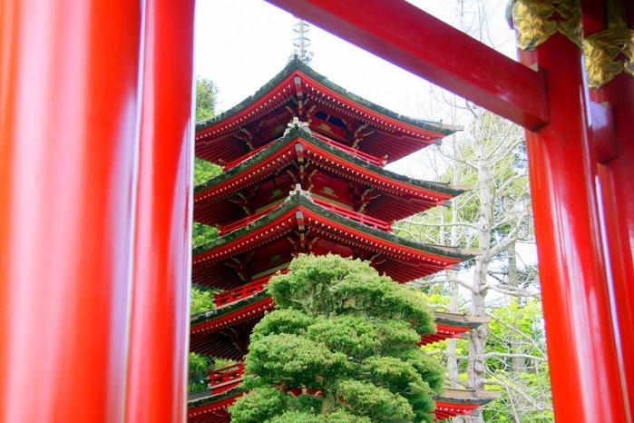 Японский чайный сад -(Hakone Japanese Tea Garden) 10555