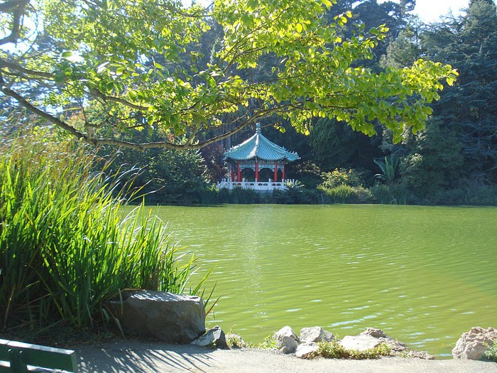 Японский чайный сад -(Hakone Japanese Tea Garden) 74090