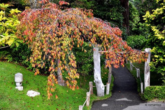 Японский чайный сад -(Hakone Japanese Tea Garden) 31769