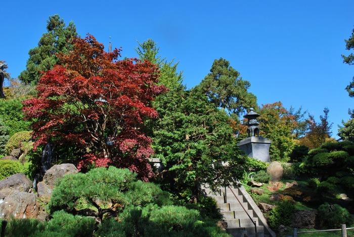 Японский чайный сад -(Hakone Japanese Tea Garden) 18034