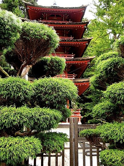 Японский чайный сад -(Hakone Japanese Tea Garden) 50120