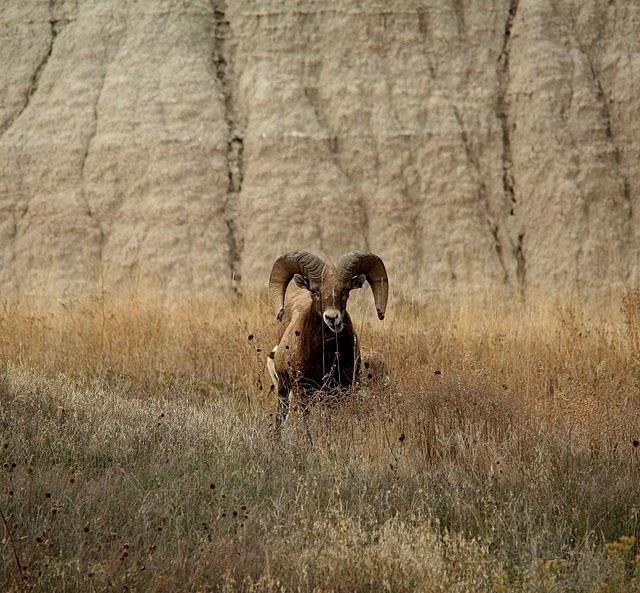 Национальный парк Badlands 56517
