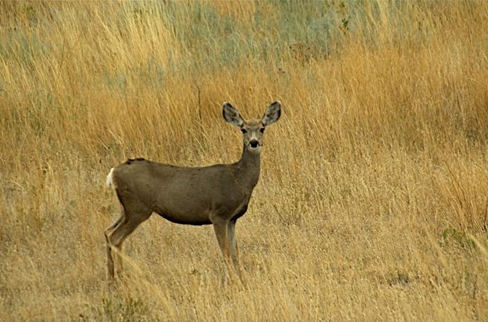 Национальный парк Badlands 52035