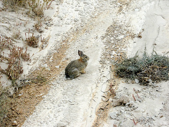 Национальный парк Badlands 46253