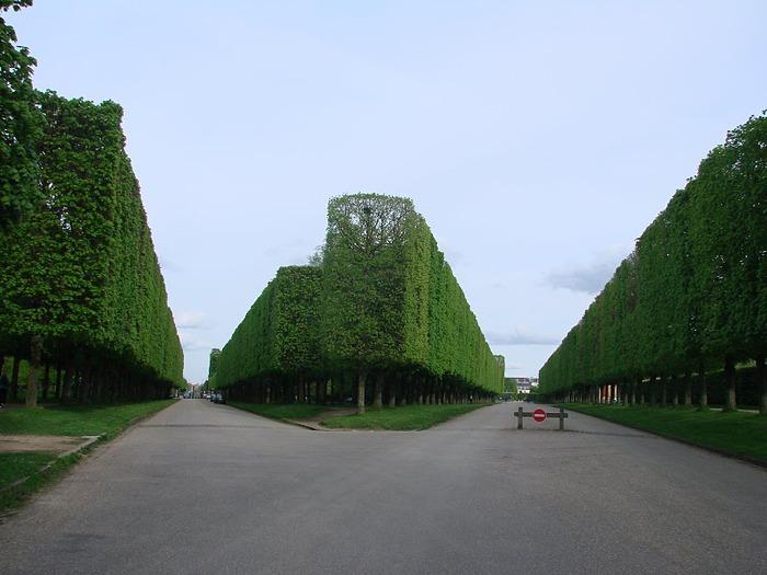 Поедем в царственный Версаль-2 88708