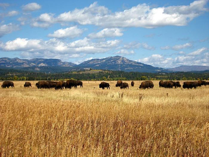 Национальный парк - Гранд Тетон 39446