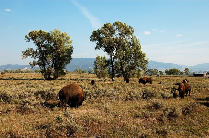 Национальный парк - Гранд Тетон 95108
