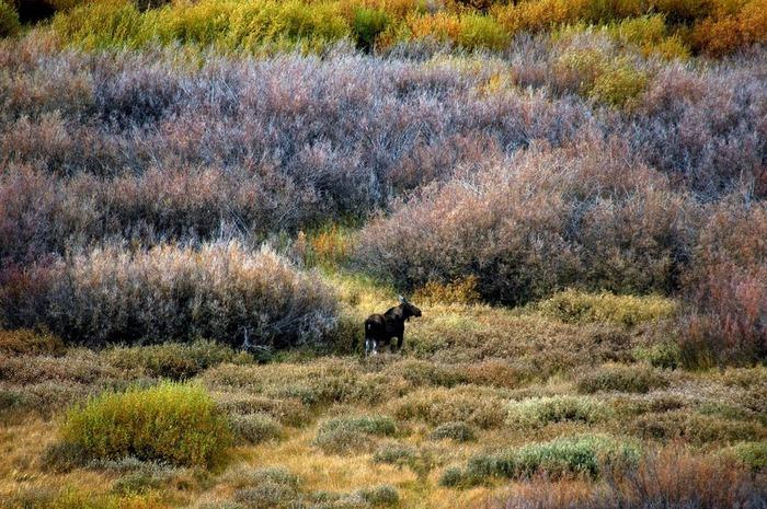 Национальный парк - Гранд Тетон 49993