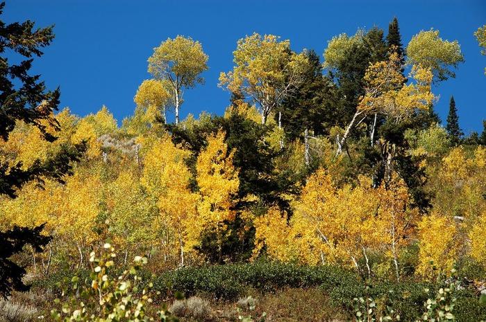 Национальный парк - Гранд Тетон 77220