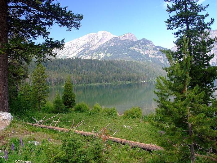 Национальный парк - Гранд Тетон 13096