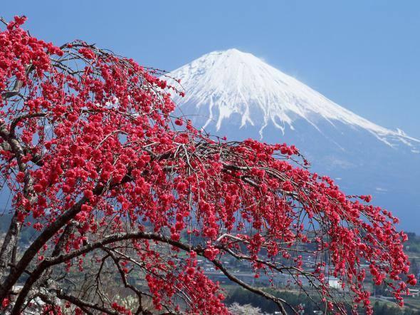 Япония: священная гора Фудзияма 98770