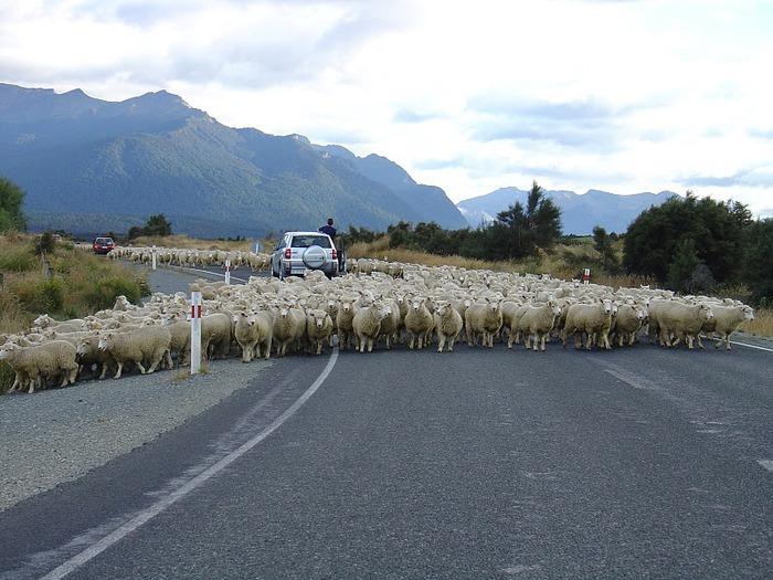 Новая Зеландия — это где? 41950