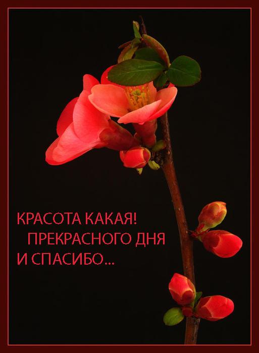 47164709_1249494133_13 (513x699, 72 Kb)
