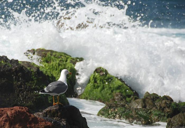 «Волшебный остров» — маленький остров Гомера 87700