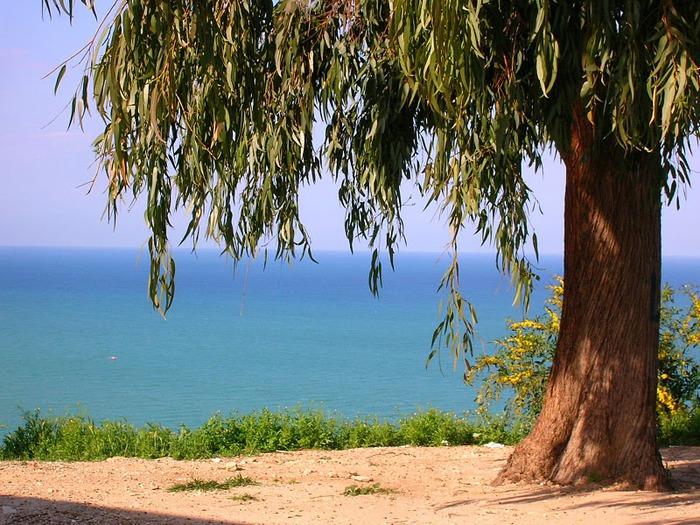Тунис. Синий город - Sidi Bou Said 35843