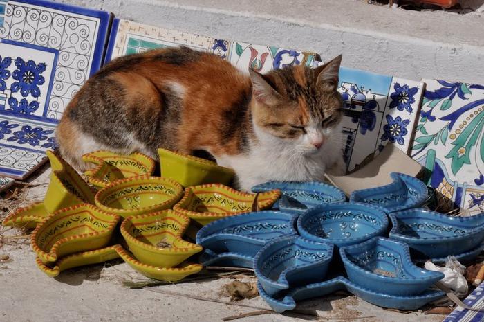 Тунис. Синий город - Sidi Bou Said 63544