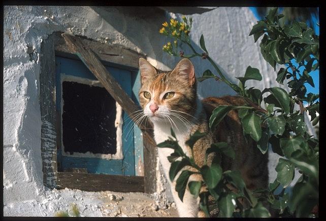 Тунис. Синий город - Sidi Bou Said 33310