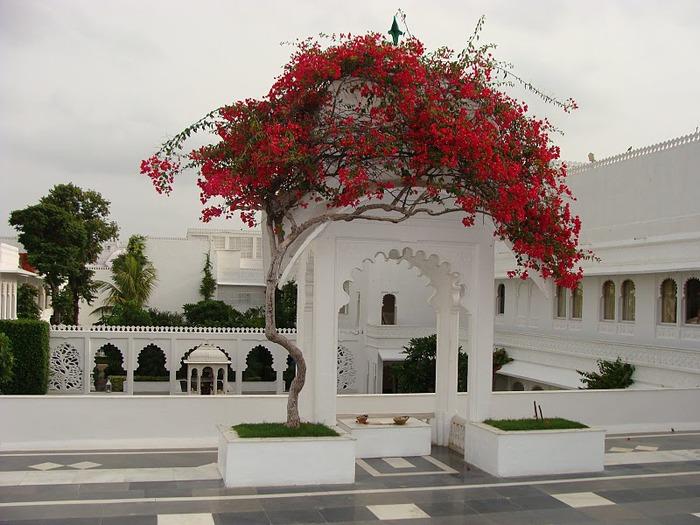 Удайпур. Udaipur 67208