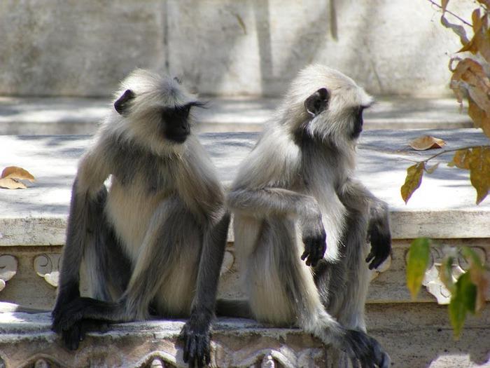 Удайпур. Udaipur 79680