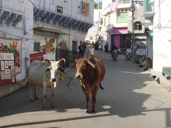 Удайпур. Udaipur 43180