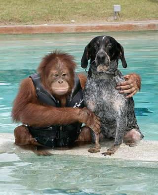 настоящие друзья орангутанг и собака