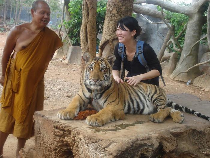 Тигровый храм (Tiger Temple) 15445