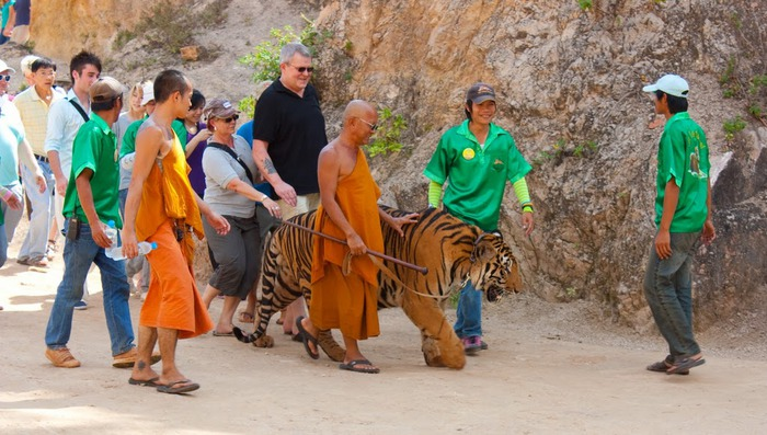 Тигровый храм (Tiger Temple) 57173