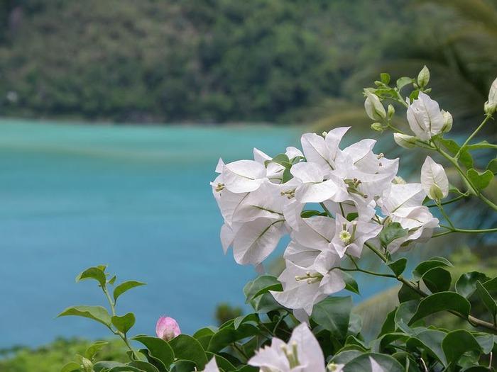 Тайланд - Острова Пи Пи--Phi Phi Islands 81408