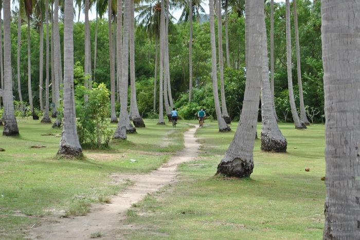 Тайланд - Острова Пи Пи--Phi Phi Islands 17724