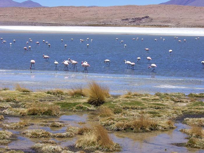 Солончак Уюни - Salar de Uyuni - Боливия 43499