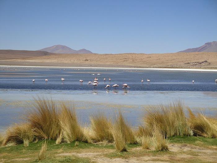 Солончак Уюни - Salar de Uyuni - Боливия 64890
