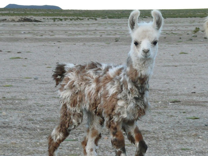 Солончак Уюни - Salar de Uyuni - Боливия 33376