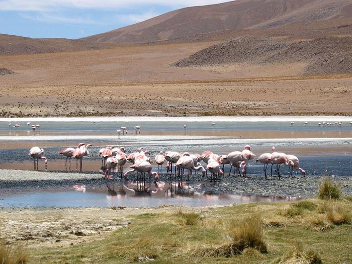 Солончак Уюни - Salar de Uyuni - Боливия 56717