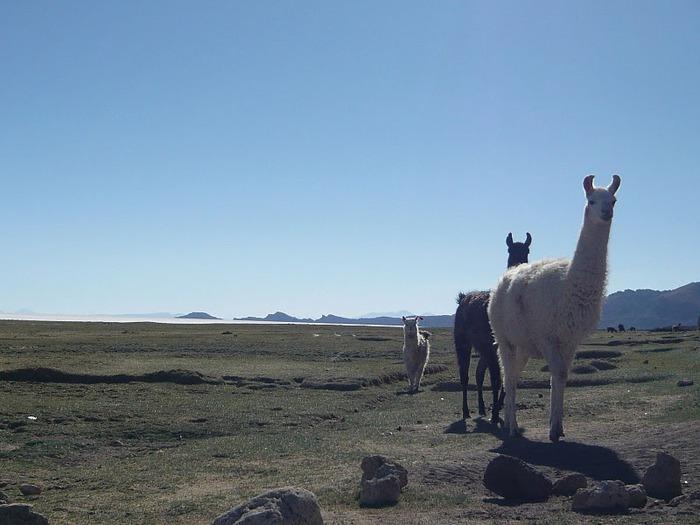 Солончак Уюни - Salar de Uyuni - Боливия 61081