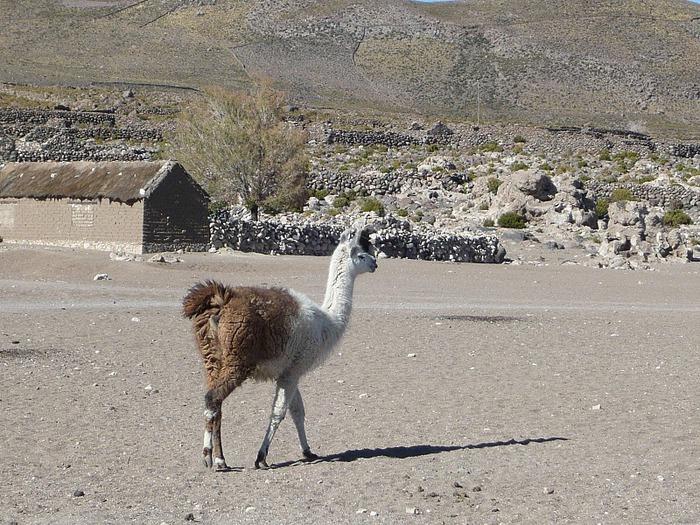 Солончак Уюни - Salar de Uyuni - Боливия 60544