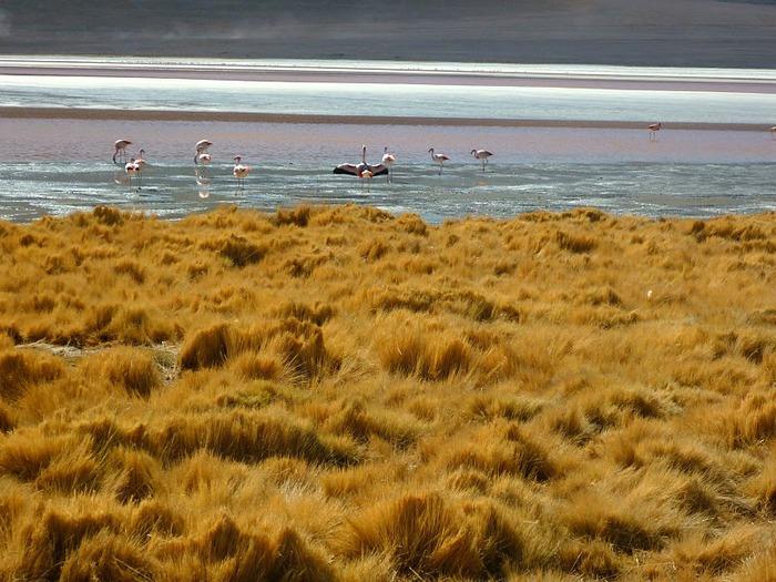 Солончак Уюни - Salar de Uyuni - Боливия 53286
