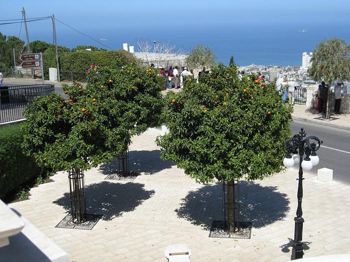 Хайфа, Бахайские сады 97090