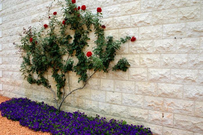 Хайфа, Бахайские сады 75456