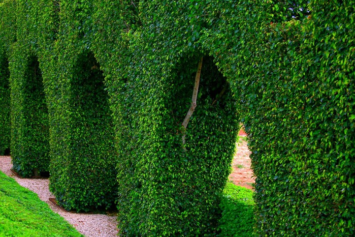 Хайфа, Бахайские сады 67457