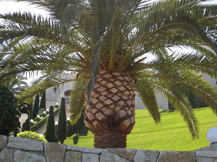 Хайфа, Бахайские сады 54905