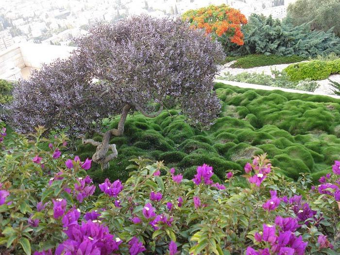 Хайфа, Бахайские сады 78455