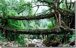 Ботаническая архитектура (часть 1)