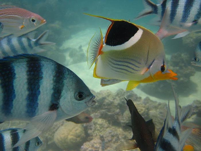 Остров Бора-Бора - жемчужина Тихого океана с перламутровой лагуной 71692