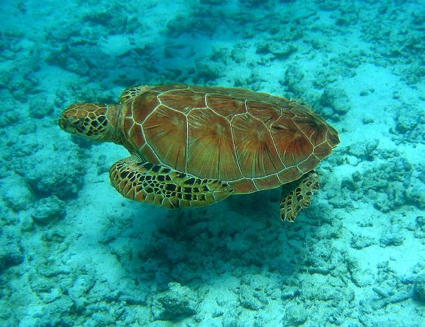 Остров Бора-Бора - жемчужина Тихого океана с перламутровой лагуной 93062