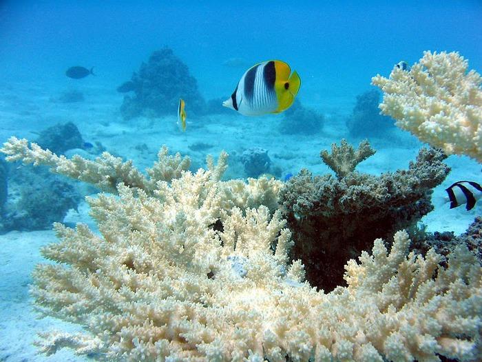 Остров Бора-Бора - жемчужина Тихого океана с перламутровой лагуной 46740