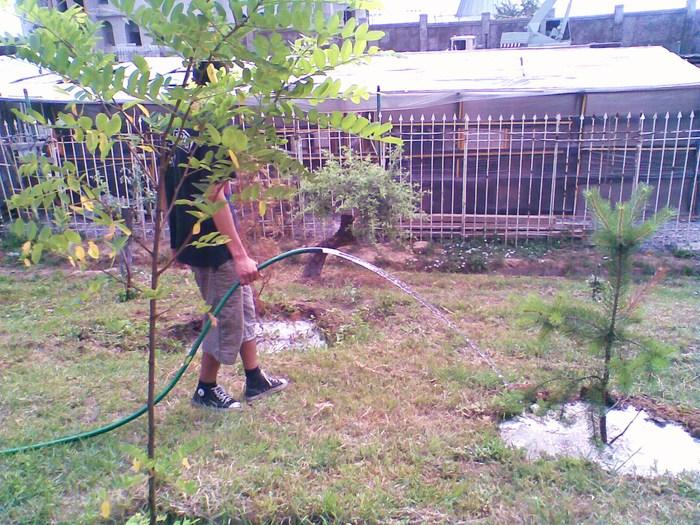поливать деревья