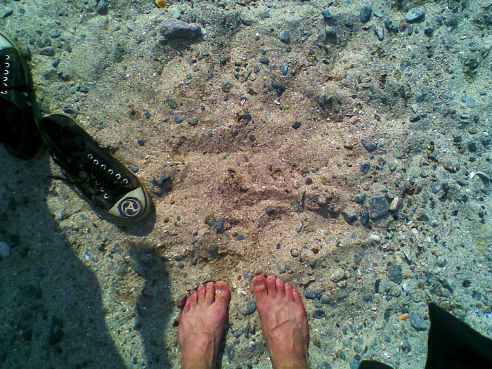 пляж, кеды аматори